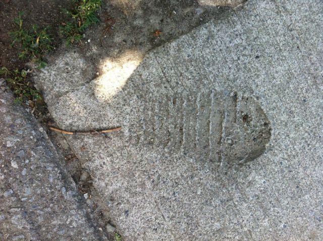 sidewalk fish