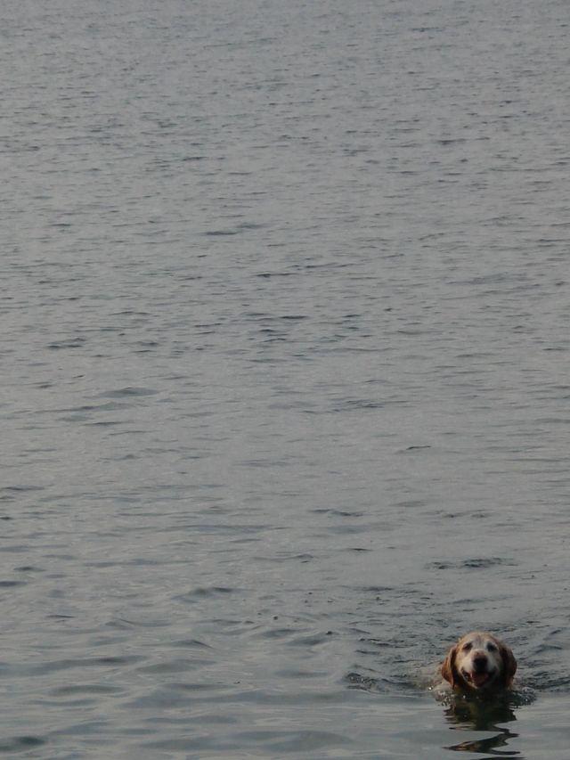 S in lake