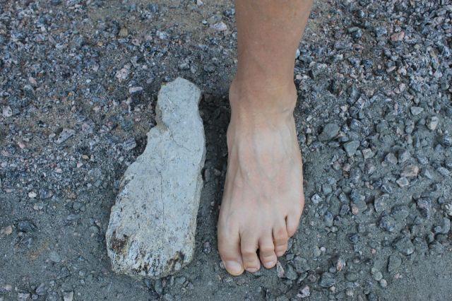 f. foot