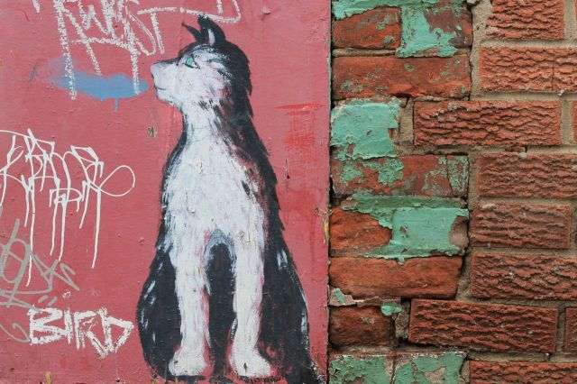 cat grafitti