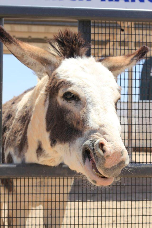 donkey2.2